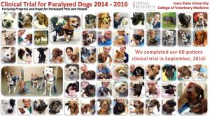 Iowa State University  college of Vet Medicine Chondroitinase Dog Trial